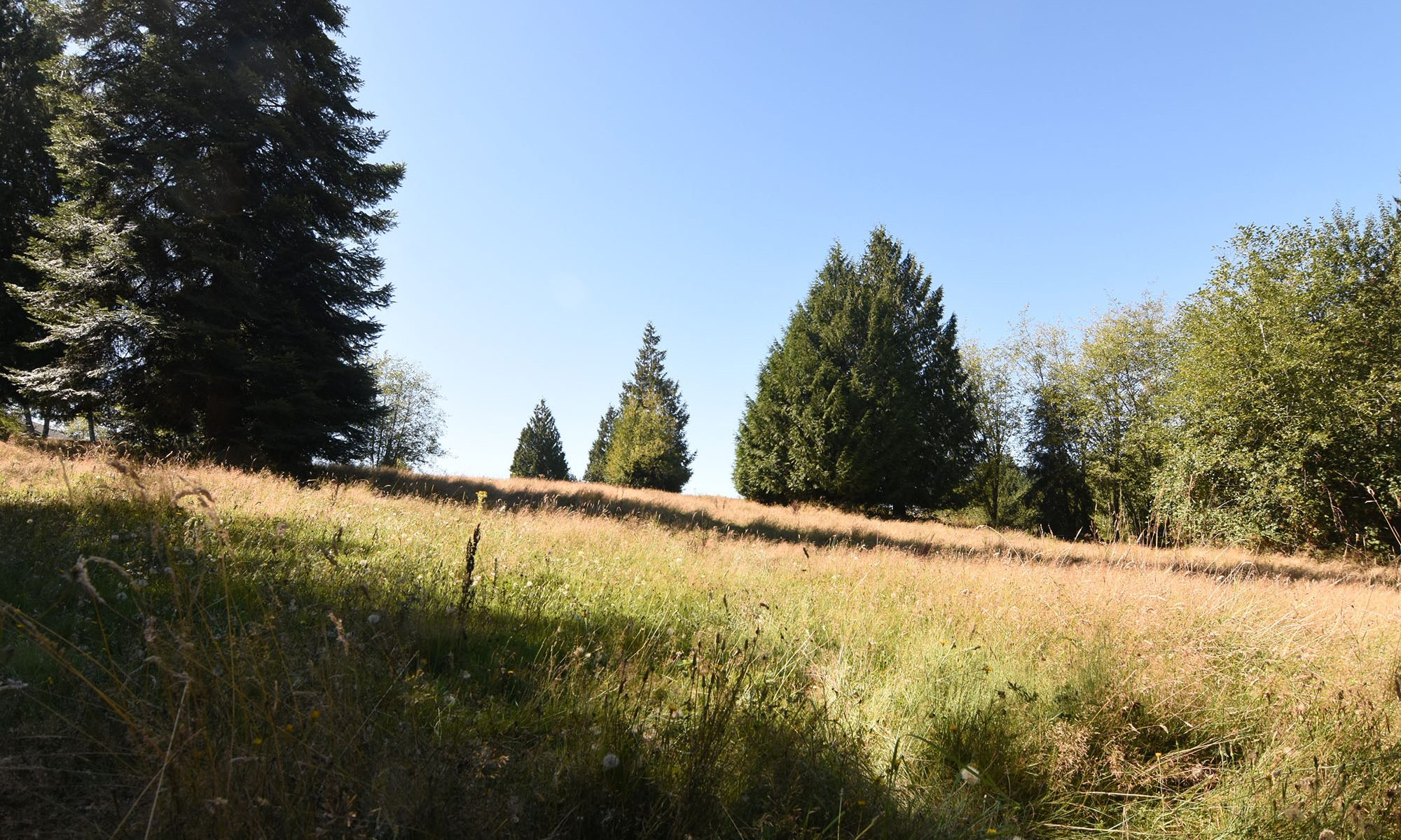 Grassy pasture with cedar groves and other trees spotted in the meadow